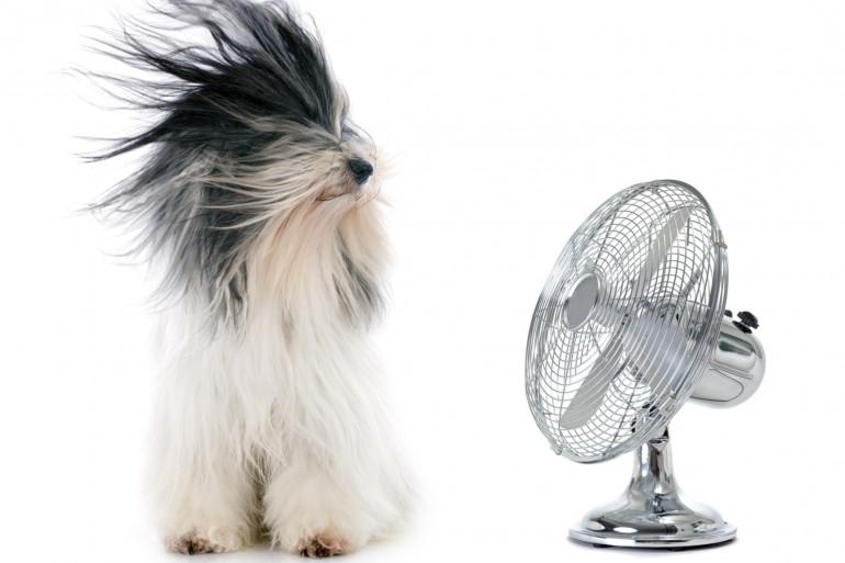 Comment rafraîchir le logement sans système de climatisation ?