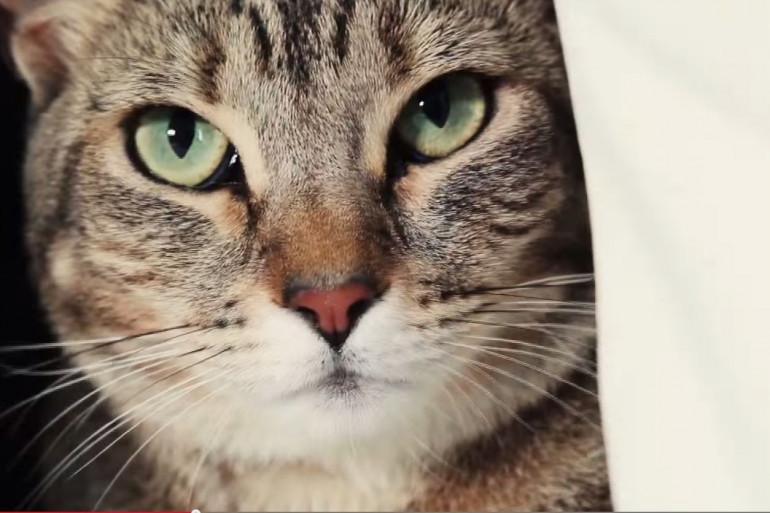 La balance connectée Tailio fournit de nombreuses informations sur votre chat en se plaçant sous la litière de ce dernier.