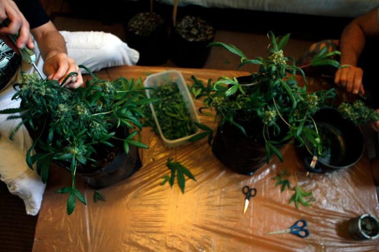 """Deux """"autocultivateurs"""" uruguayens de cannabis, à Montevideo, le 10 décembre. (archives)"""