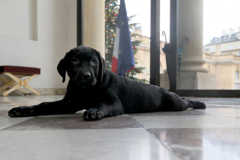Philae, le chien de François Hollande