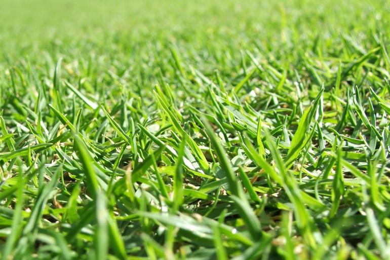 Comment remplacer une pelouse