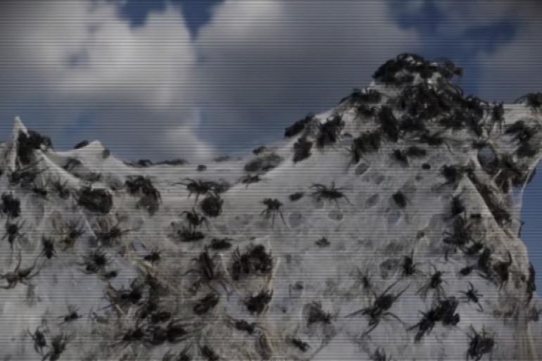 Les Australiens surpris par une pluie d'araignées