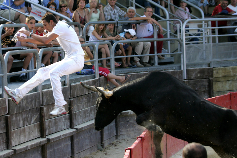 Le raseteur Sabri Allouani est poursuivi par un taureau lors d'une traditionnelle course camarguaise, le 19 juillet 2006 à Vendargues.