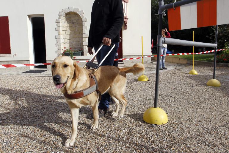 Un éducateur avec un chien guide d'aveugle (illustration).
