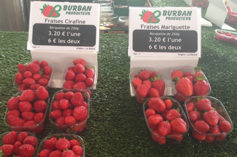 Les Mariguettes et les Cirafines, 2 variétés de fraises à déguster cet été