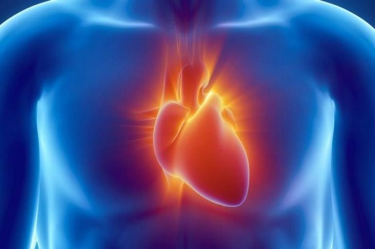 Le cœur humain (illustration)