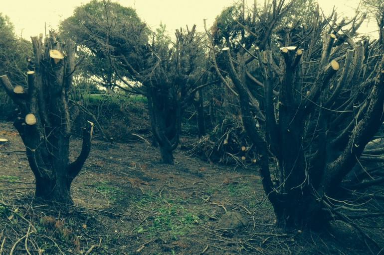 Un voisin a tronçonné les arbres de la propriété voisine pour avoir une plus belle vue