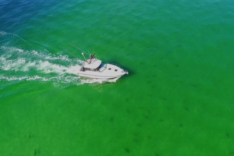 Le photographe Cory Peterson était en train de pêcher lorsqu'il a été témoin d'une scène étonnante