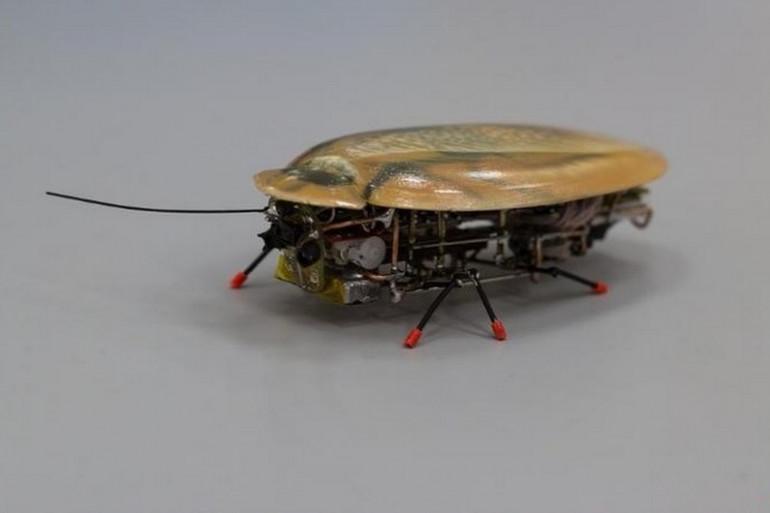 Le robot cafard de l'Université Emmanuel Kant de Kaliningrad