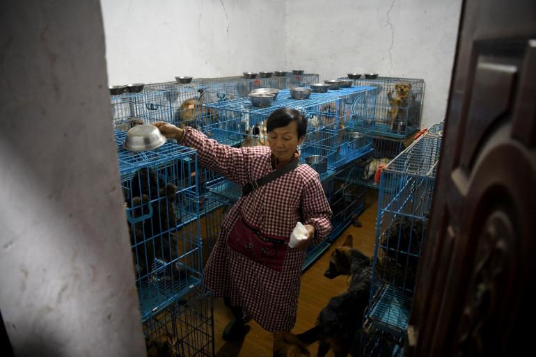 Wen Junhong, 68 ans, vit avec 1.300 chiens