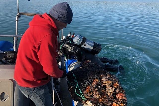 Tomy et Laurent pêchent les Saint-Jacques à la main à Saint-Malo