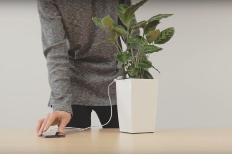 Bioo, la plante qui recharge votre portable