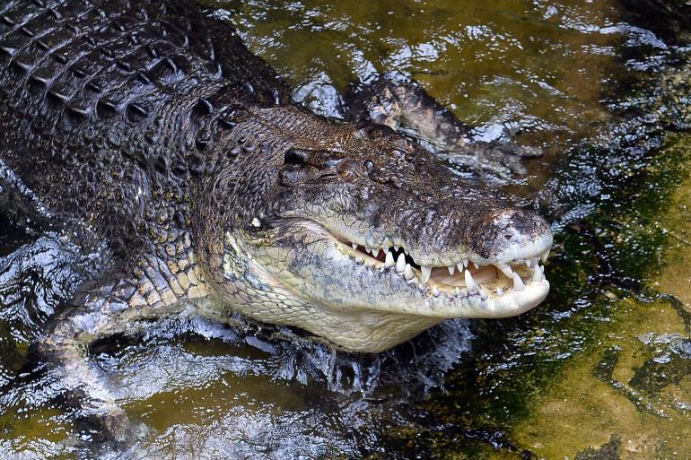 Australie : une femme happée par un crocodile lors d'une baignade nocturne