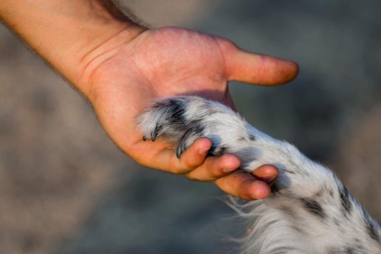 Les animaux peuvent changer notre vie