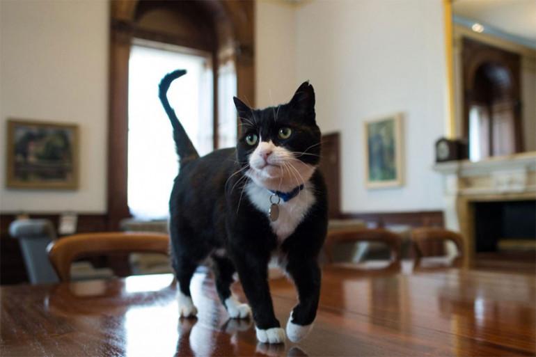 Palmerston, le chat du secrétaire d'État britannique aux Affaires étrangères