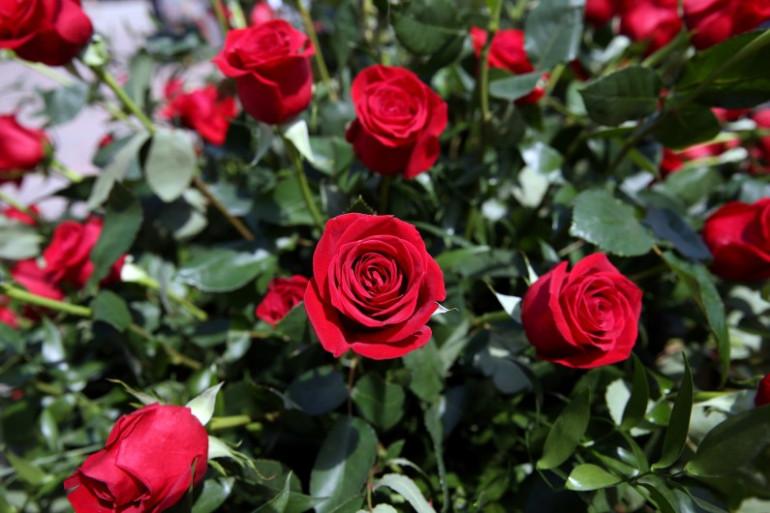 Un bouquet de roses rouges (illustration)