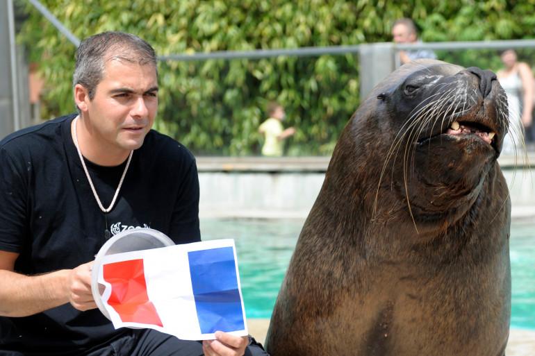 L'otarie Watson aux côtés de Pablo Joury, responsable des mammifères marins au zoo d'Amnéville, en juin 2014