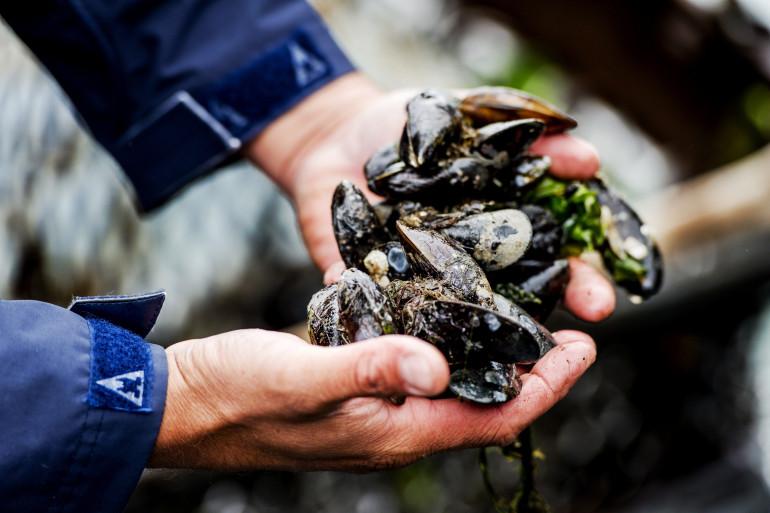 Les personnes allergiques aux acariens doivent éviter les fruits de mer
