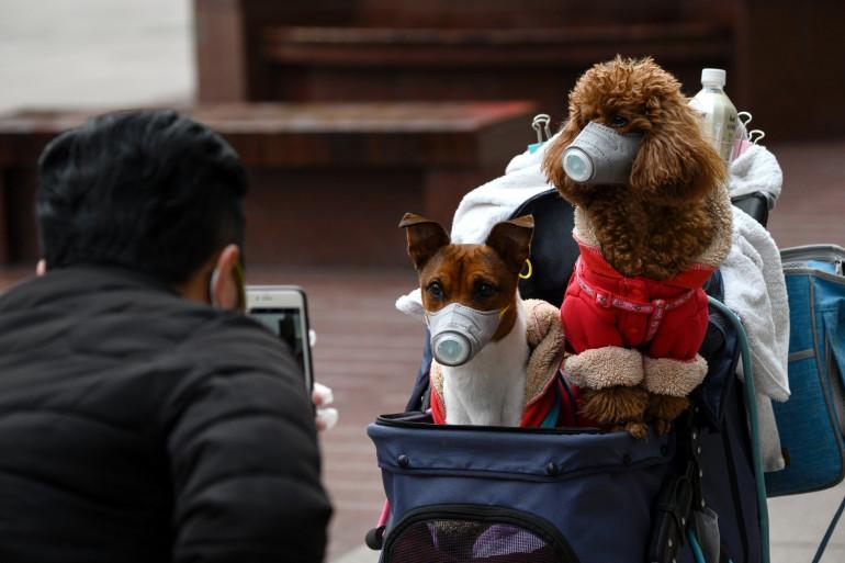 Des chiens équipés de masques, en pleine épidémie de coronavirus en Chine, février 2020.