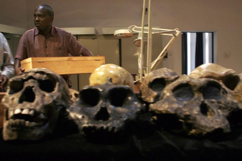 Des découvertes de squelettes de l'homo erectus, au Kenya en 2007
