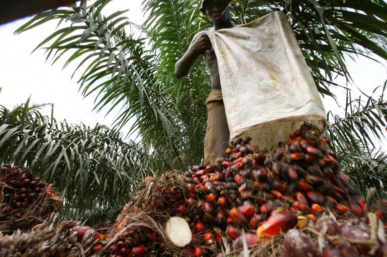Un homme participant à la récolte des fruits à l'origine de l'huile de palme