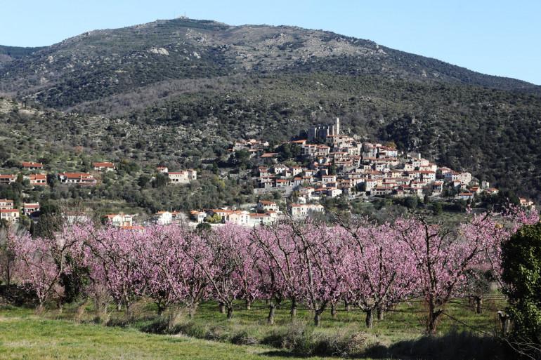 Un champ de pêchers en fleurs, à Eus, dans les Pyrénées-Orientales, le 26 février 2020.