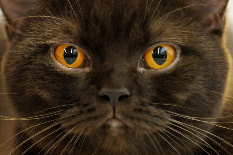 Un chat. (Photo d'illustration)