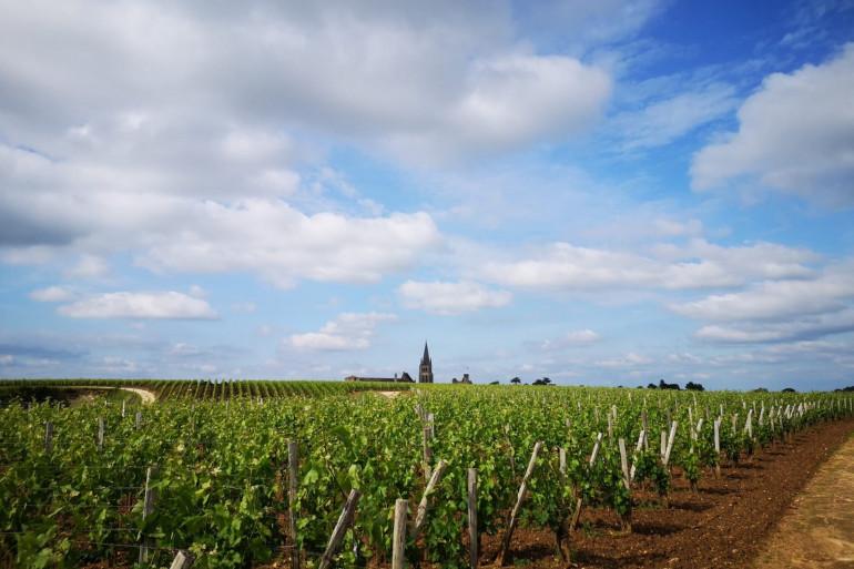 Un vignoble en France (illustration)
