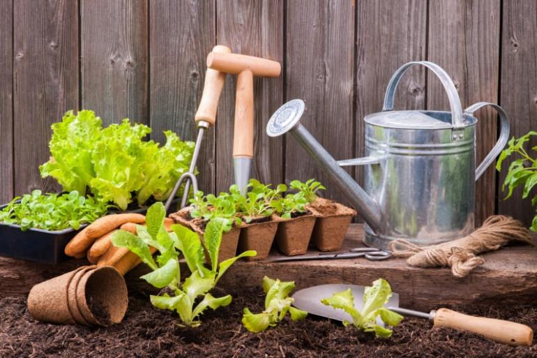 Toutes les astuces pour un jardin écolo