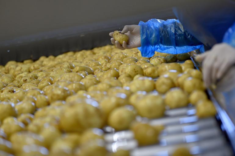 Les pommes de terre de Noirmoutier (illustration)