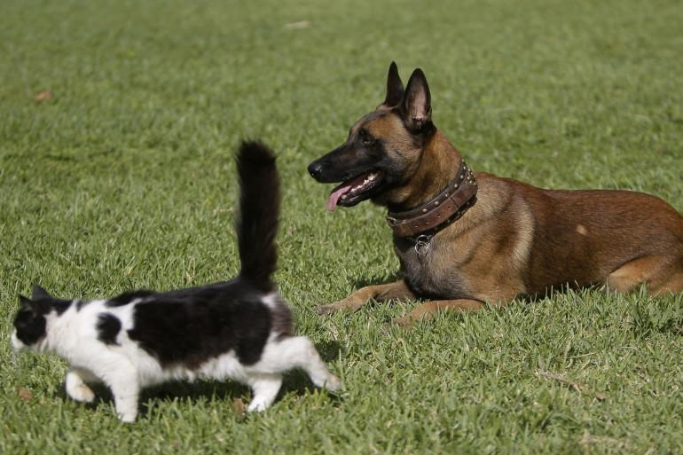 Un chien et un chat (illustration)