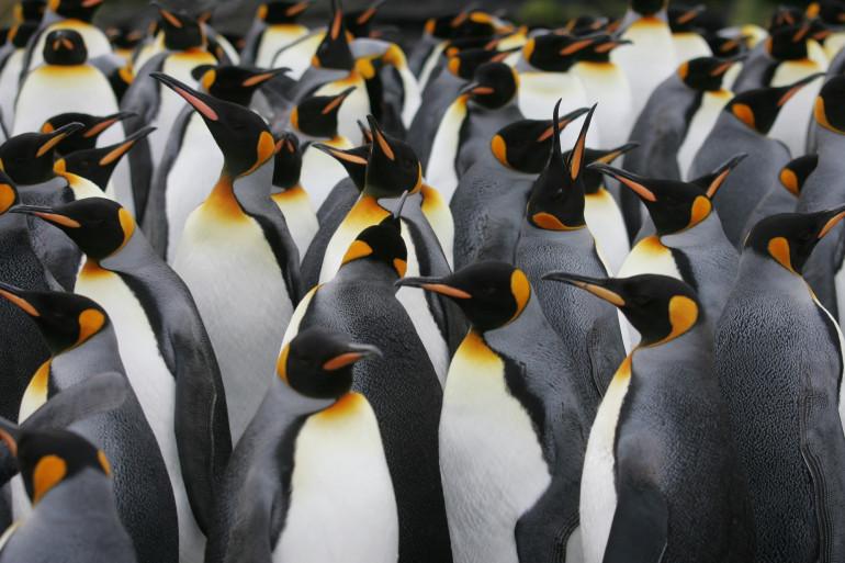 Une colonie de manchots empereurs, le 1er juillet 2007 en Antarctique