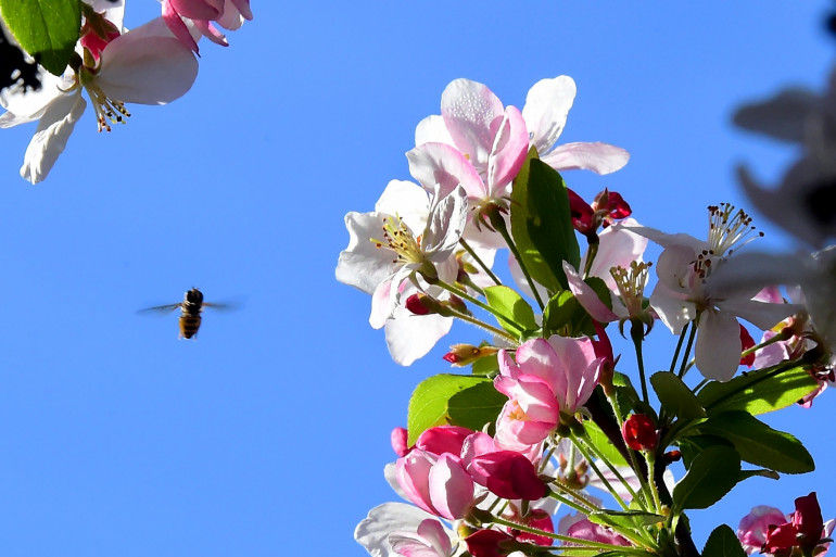 Une abeille butinant une plante (illustration)