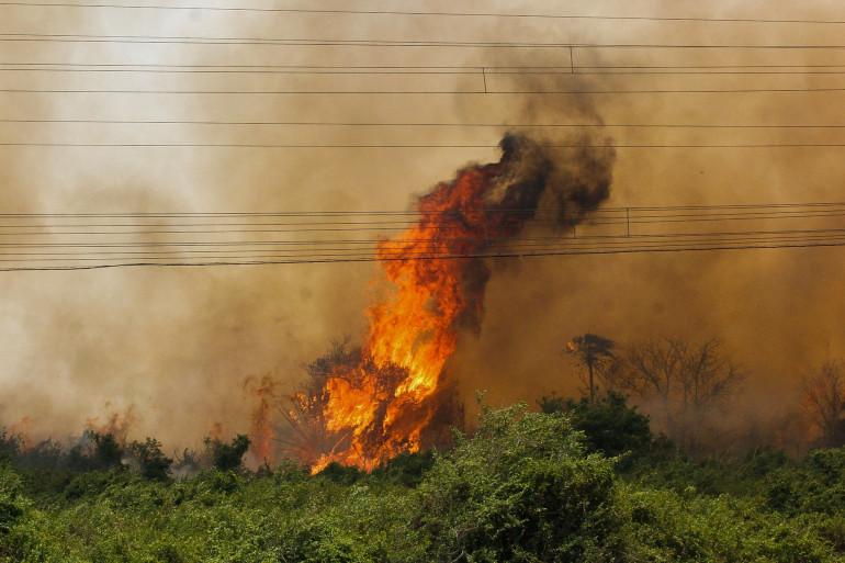 Un feu de fôret à Corumba au Brésil, le 30 octobre 2019.