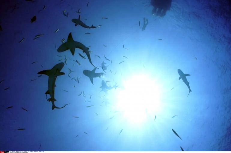 Pourquoi il ne faut pas avoir peur des requins en France (illustration)