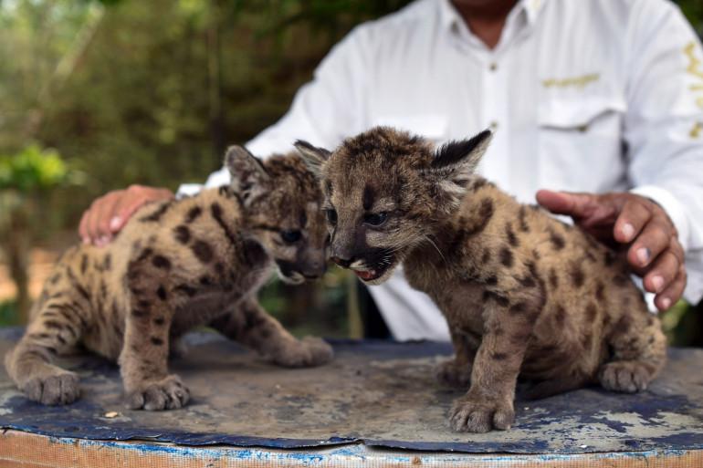 Deux bébés du zoo de la ville de Cordoba