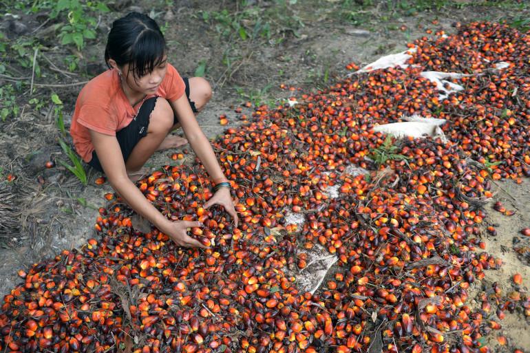 Une fillette de 13 ans en plein travail dans une plantation d'huile de palme en Indonésie.