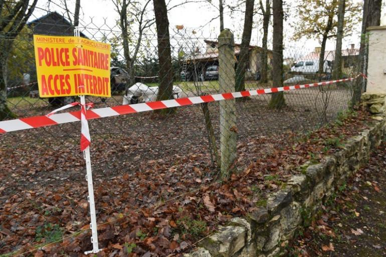 Un élevage fermé à cause de la grippe aviaire (Image d'illustration)