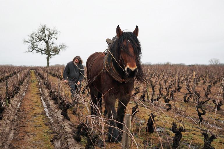Depuis plusieurs semaines, de nombreux chevaux ont été retrouvés mystérieusement morts