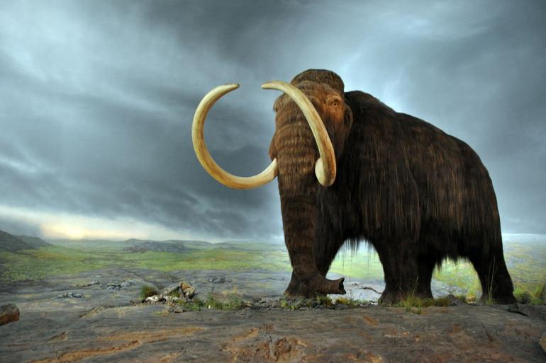 Plus de 100 mammouths, de chameaux, de chevaux, de bisons, de poissons, d'oiseaux, d'antilopes et de rongeurs ont été retrouvés
