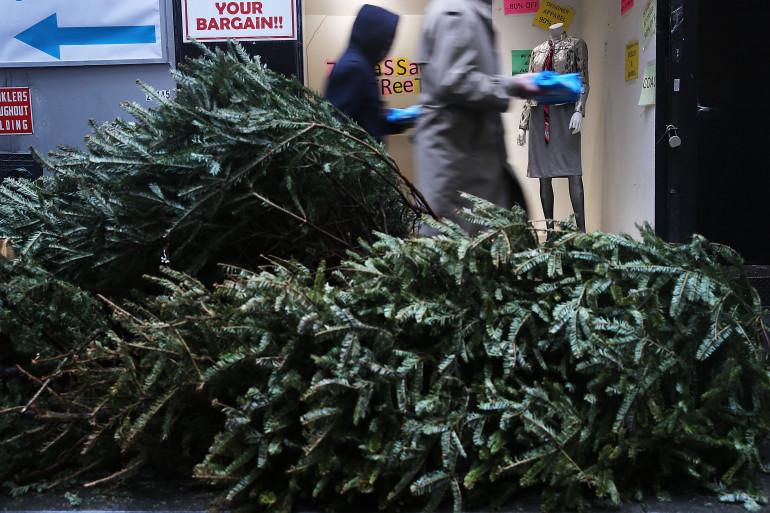 Certaines mairies organisent une collecte pour recycler les sapins de Noël usés