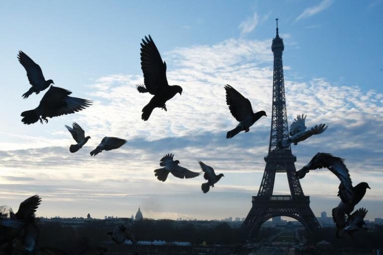 Des pigeons devant la Tour Eiffeil