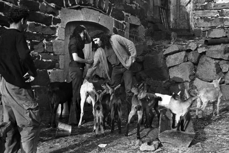 Photo datée de 1971, de Pierre Conty au milieu des chèvres dans une ferme de l'Ardèche.