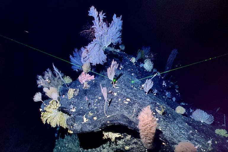 La fosse des Marianne descend jusqu'à 10.994 mètres de profondeur.