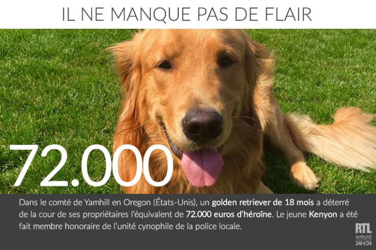 Un chien déterre l'équivalent de 72.000 euros d'héroïne