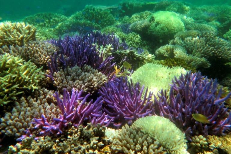 Des récifs coraliens (Illustration)