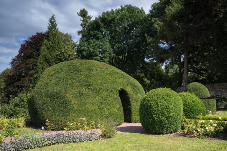 Parmi les quatorze prétendants au titre de l'arbre de l'année 2017 figure un arbre en forme d'igloo
