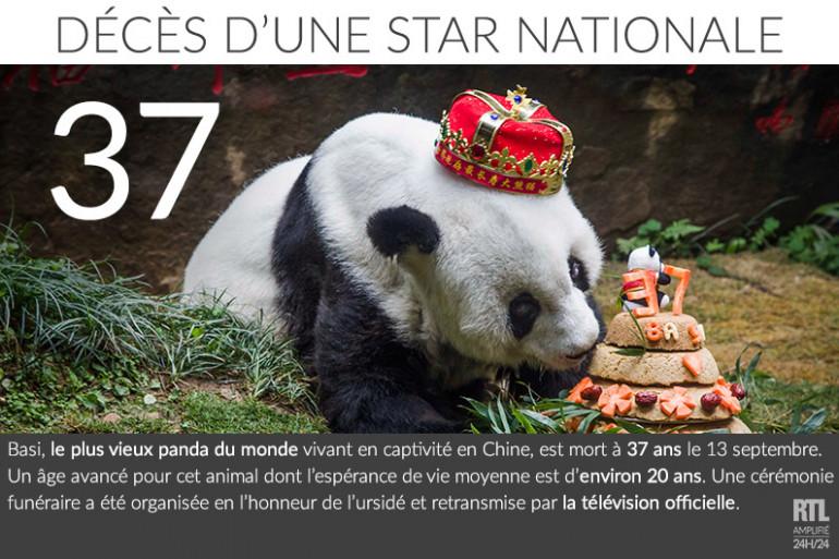 Le plus vieux panda du monde meurt à 37 ans en Chine