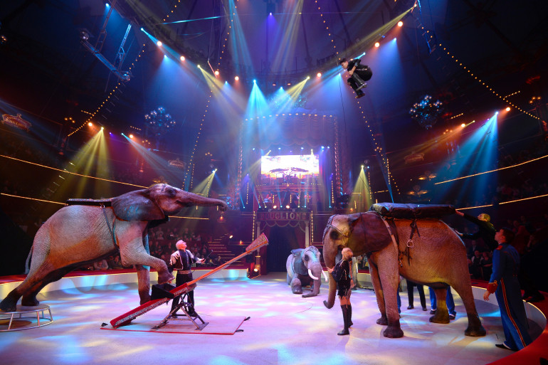 Un spectacle du cirque Bouglione au Cirque d'Hiver à Paris, le 23 octobre 2014