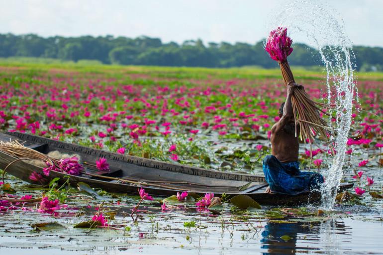 Une barque au milieu des lotus